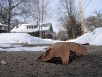 Sidewalk, Leaf and Snow by Manzabar