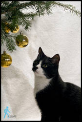 Christmas Cat by wlkr