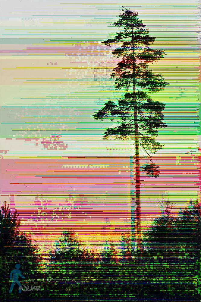 Rainbow Tree by wlkr
