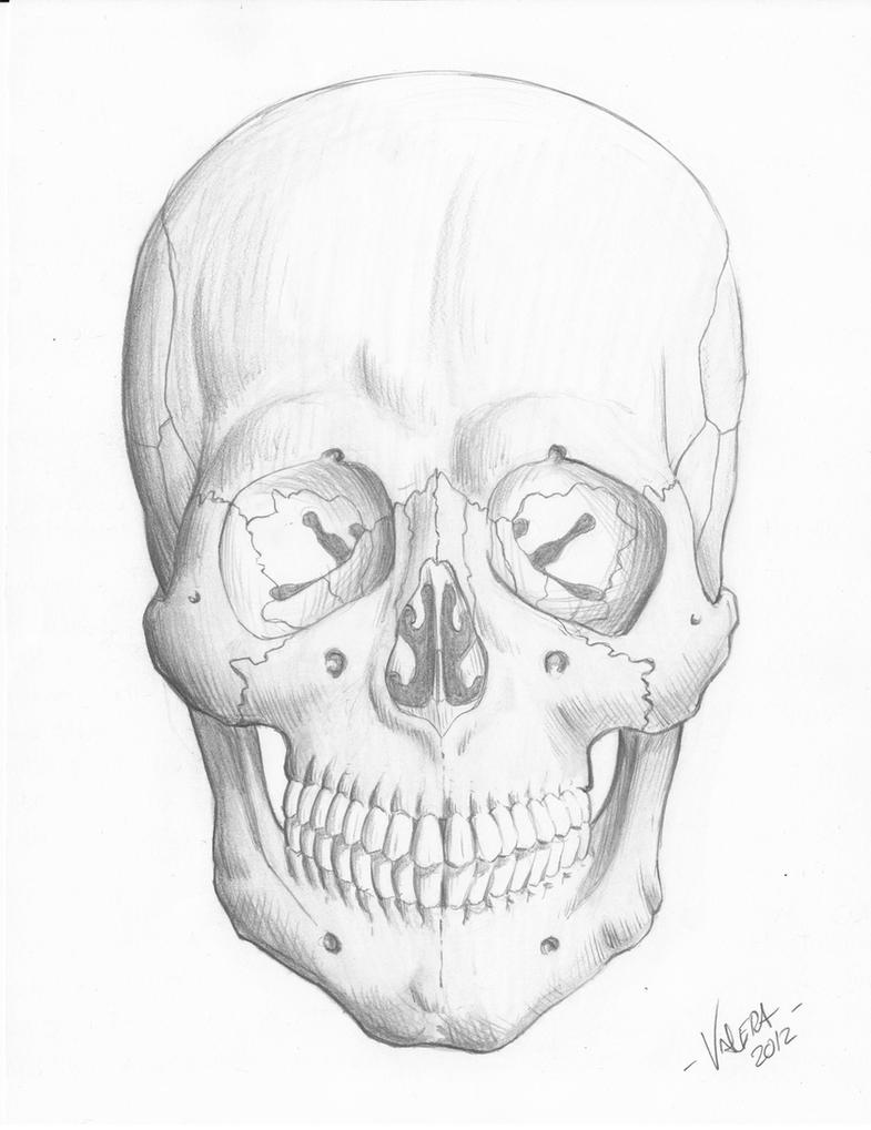 The Human Skull by RV1994
