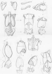 Random anatomy sketches 2 by RV1994