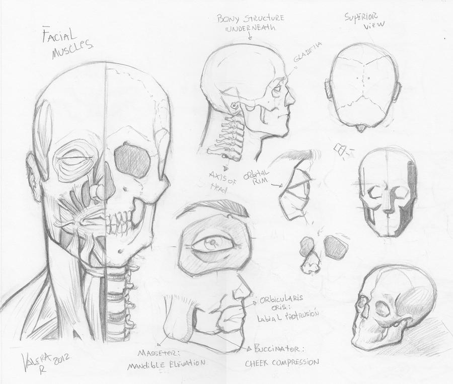 Random anatomy sketches 3 by RV1994