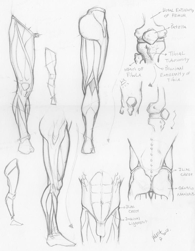 Random anatomy sketches 4 by RV1994