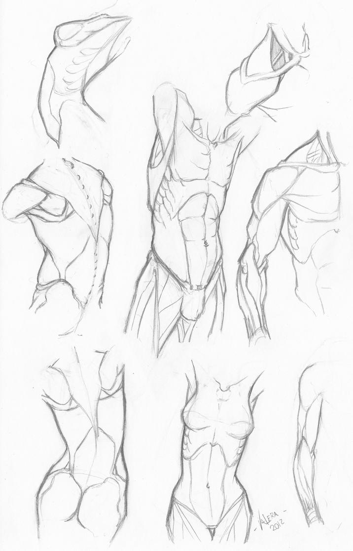 Random anatomy sketches 5 by RV1994 on DeviantArt