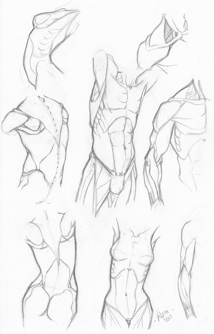 Random anatomy sketches 5 by RV1994 on DeviantArt