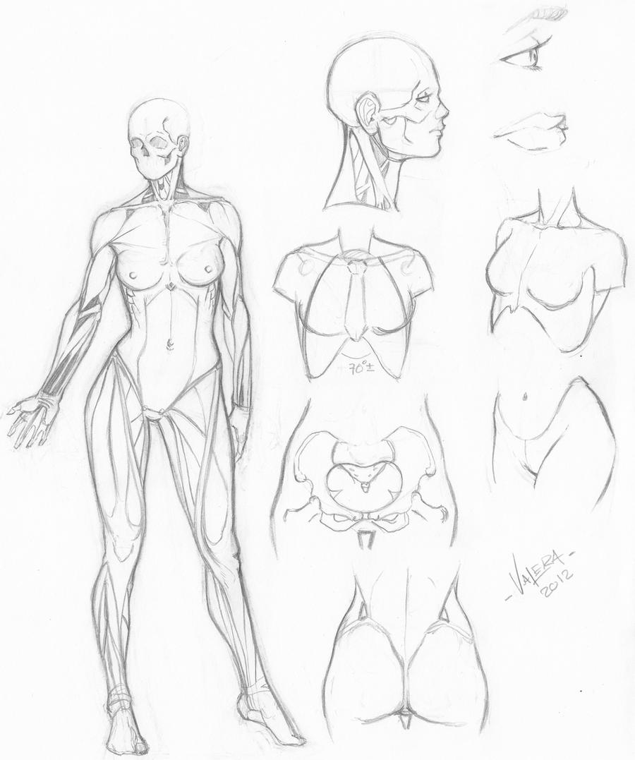 Random anatomy sketches 6 by RV1994 on DeviantArt