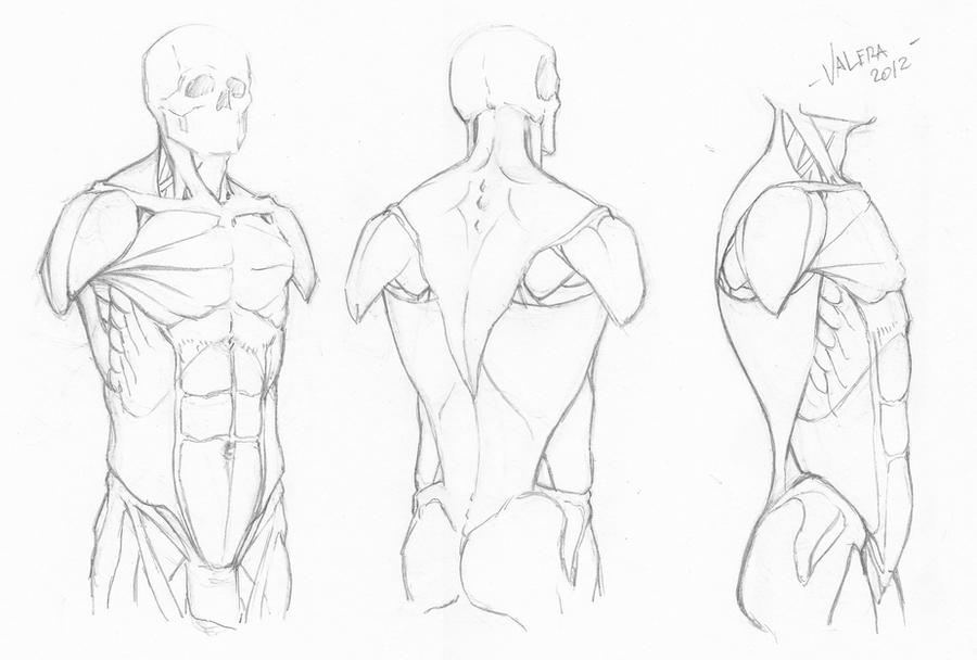 Random anatomy sketches 7 by RV1994 on DeviantArt