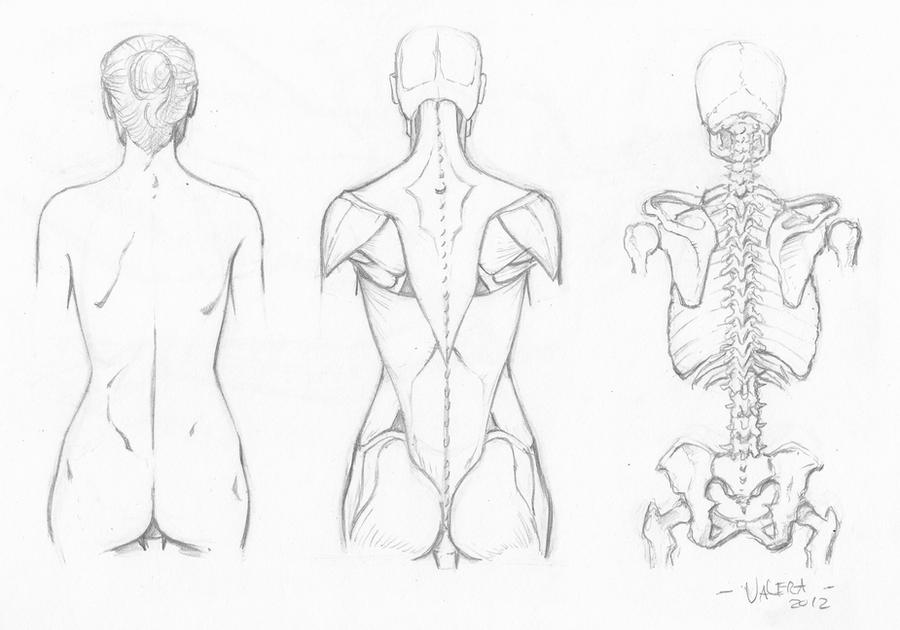 Random anatomy sketches 8 by RV1994
