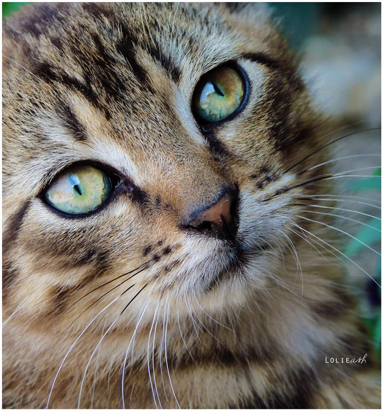 Green eyes. by MelcieLerua