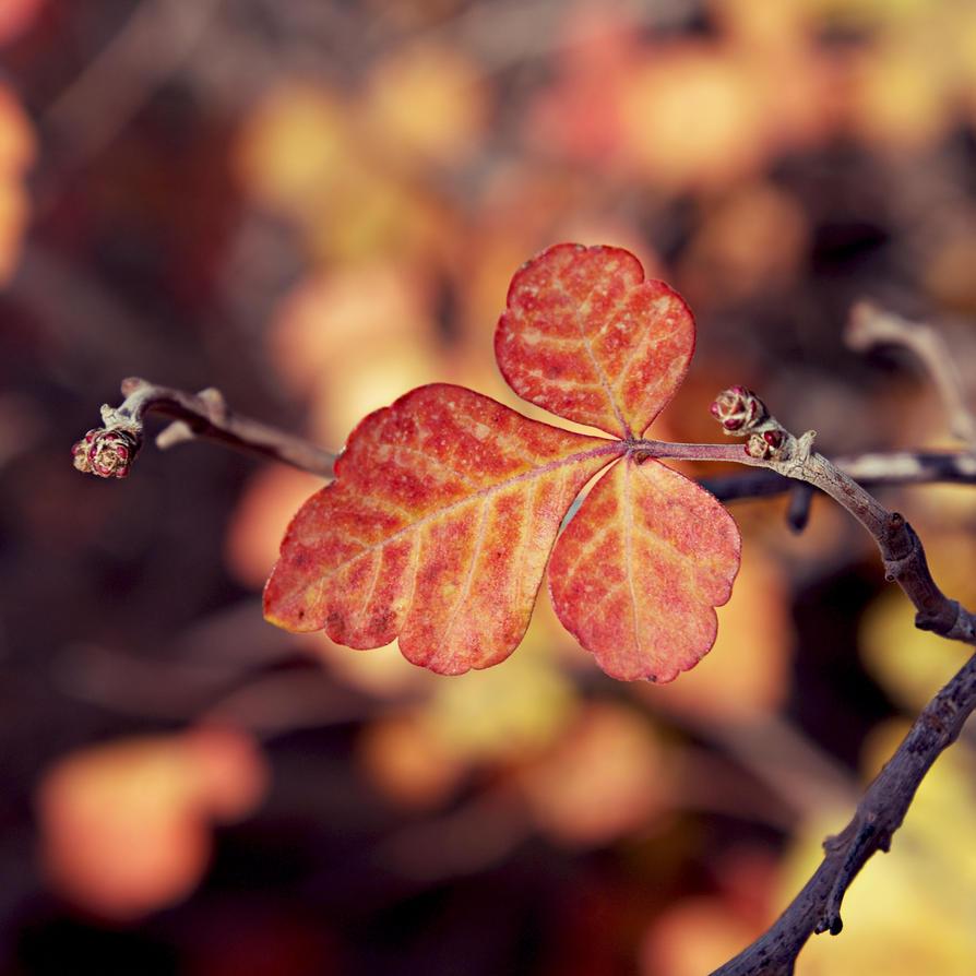 Leaf by js-sj