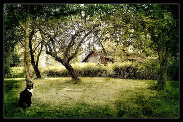 Under the Apple Trees by hillo-sipuli