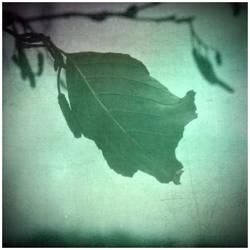 Leaf by hillo-sipuli