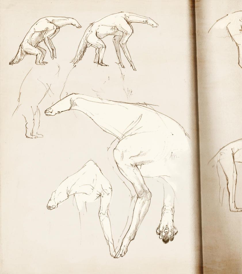 Notebook creatures 2 by Exobio