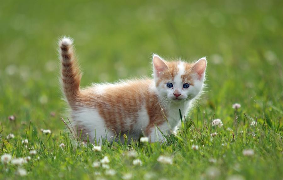 Sweet kitten by blackmaster111