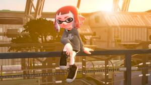 Sunset Squid