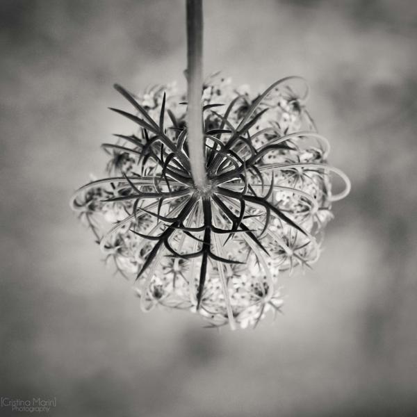 Pendulous posy by MarinCristina