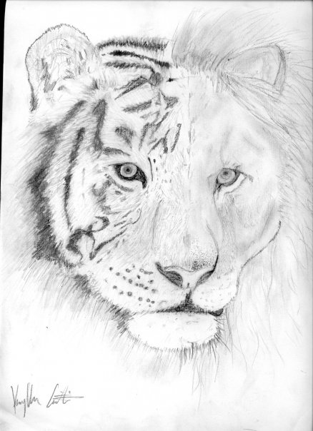 Lion And Tiger Mix Drawing | www.pixshark.com - Images ...