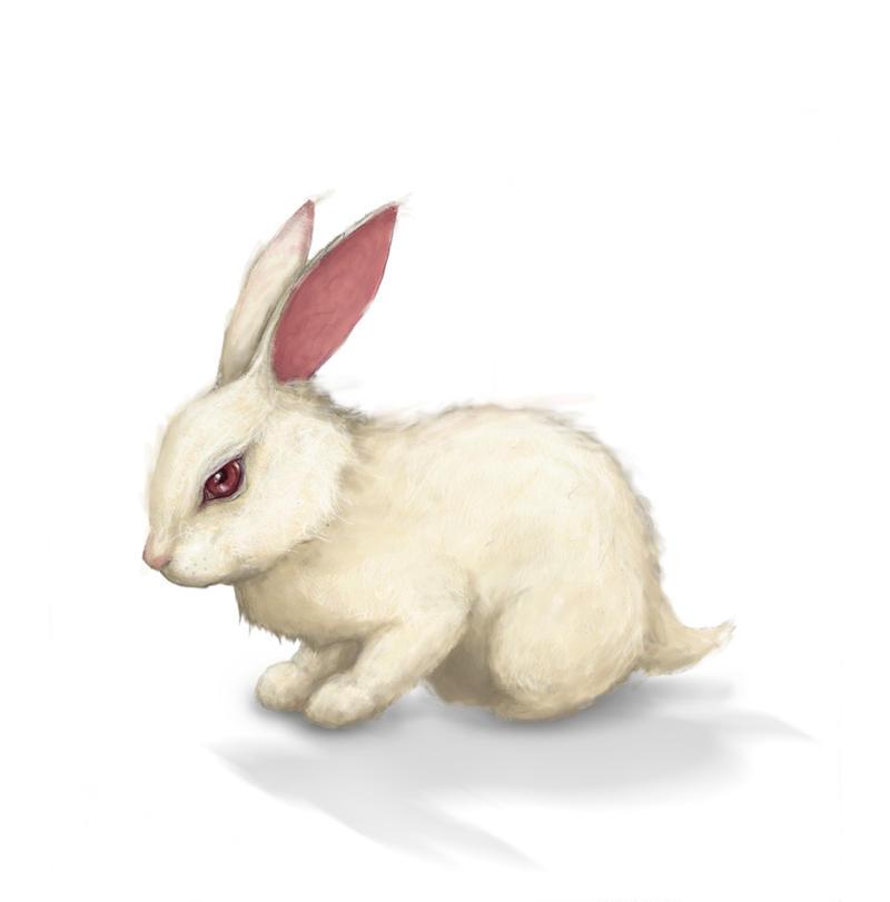 White rabbit painting - photo#11