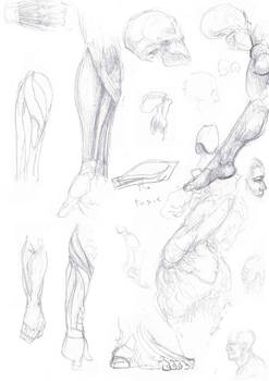Study Sketch, hands, fore arms and feet