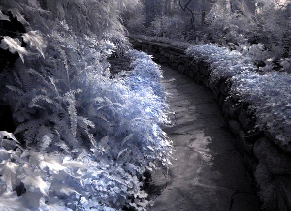 Infrared Garden Path by clockwork-zero