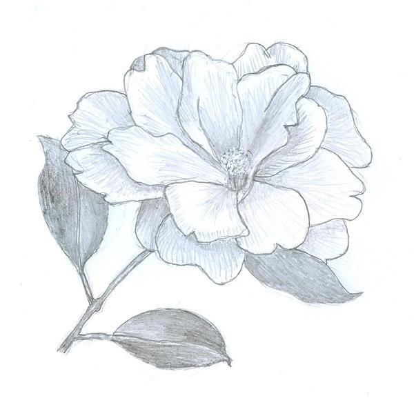 White Camellia By Clem Uzumaki On Deviantart