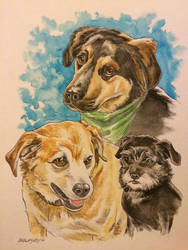 3 dogs commission