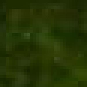 FoxyTPF's Profile Picture