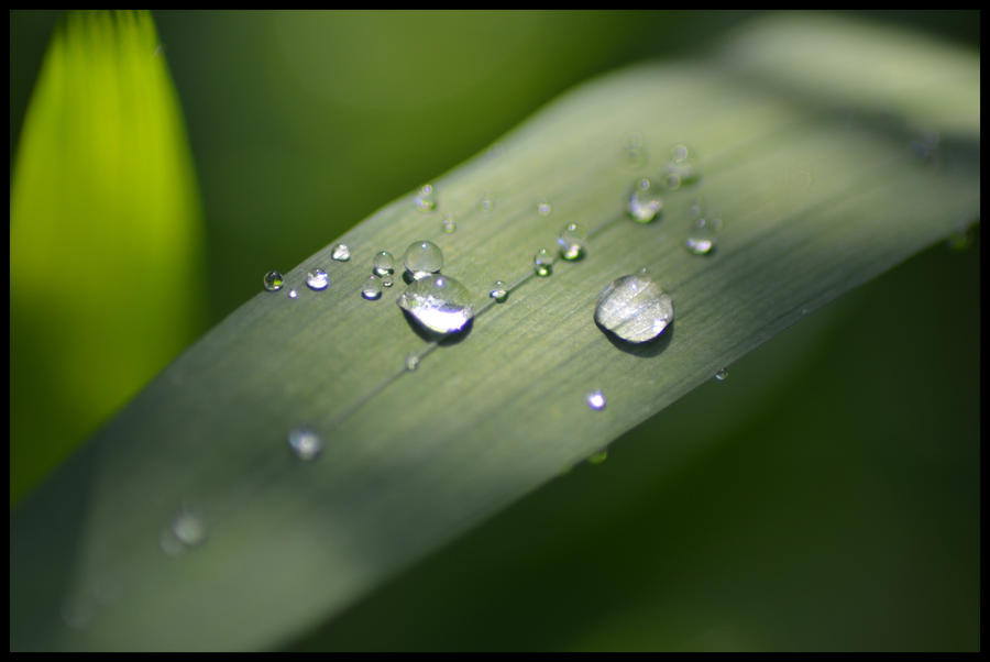 Leaf Droplets by alinthea