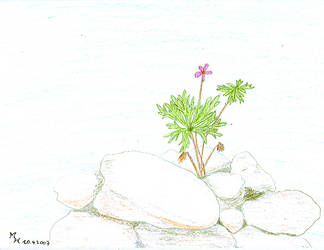 Pink Flower With Rocks by MichaFire