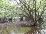 Under the Swamp Canopy