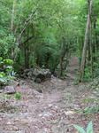 Rocky Tropical Forest Path