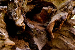 Sequoia Trunk - Color.