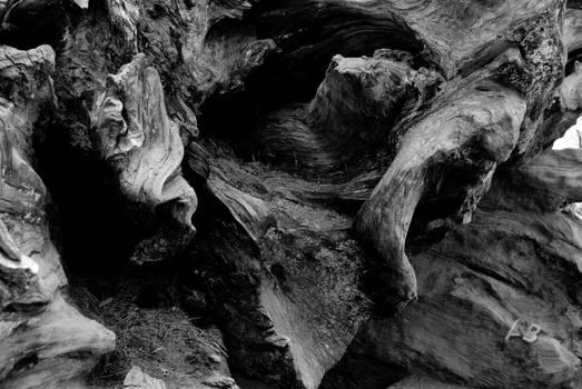 Sequoia Trunk - Black n White.
