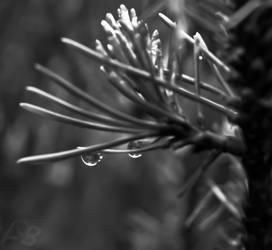 Raindrop 3.