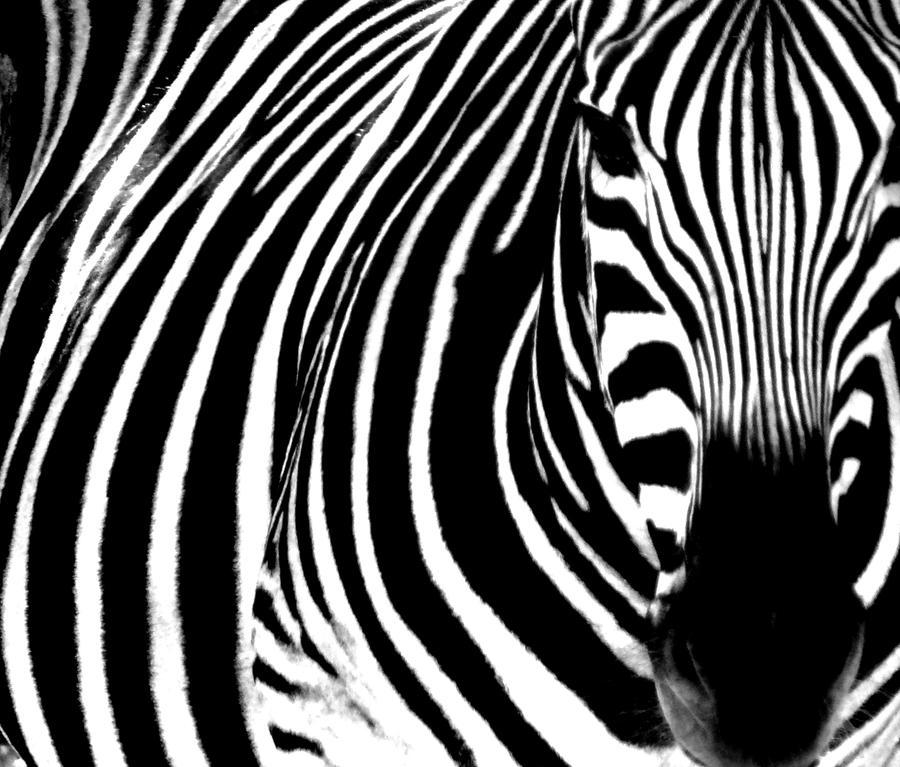 Animals by TnKArts
