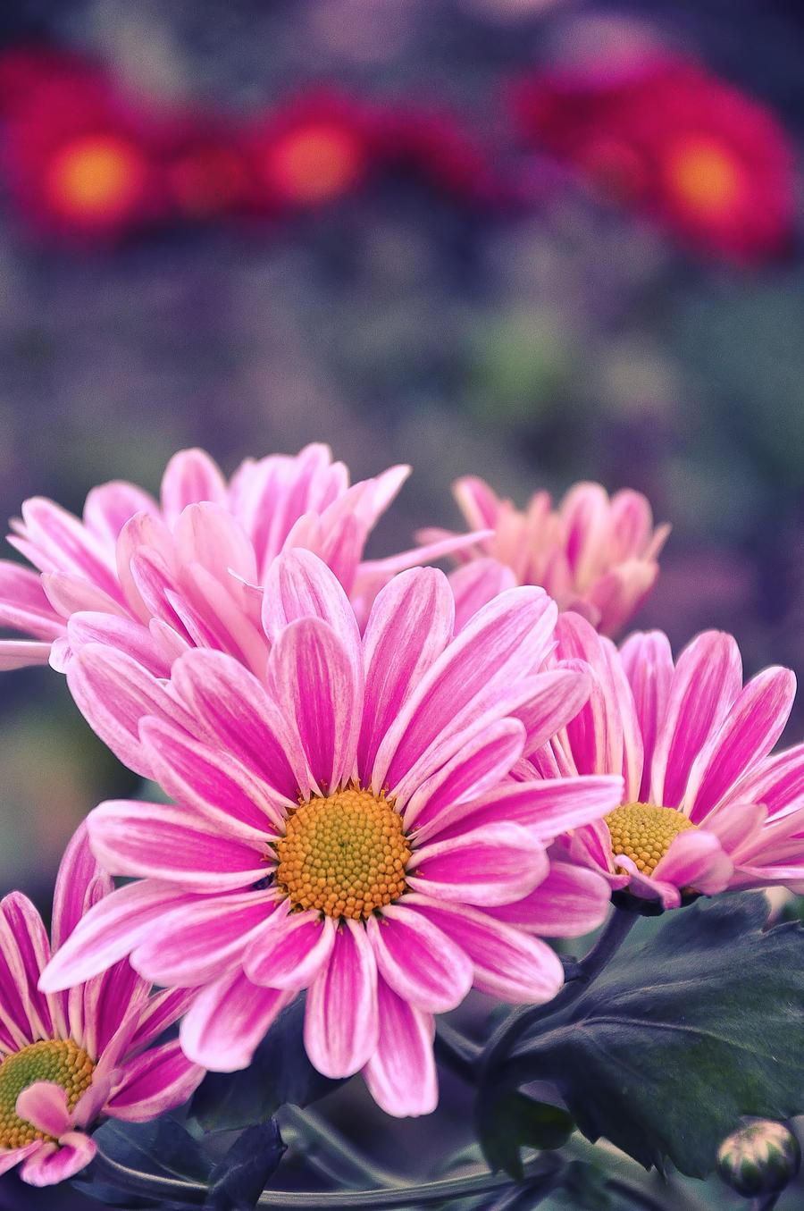 Oh...I feel so pink by Mega-Shots