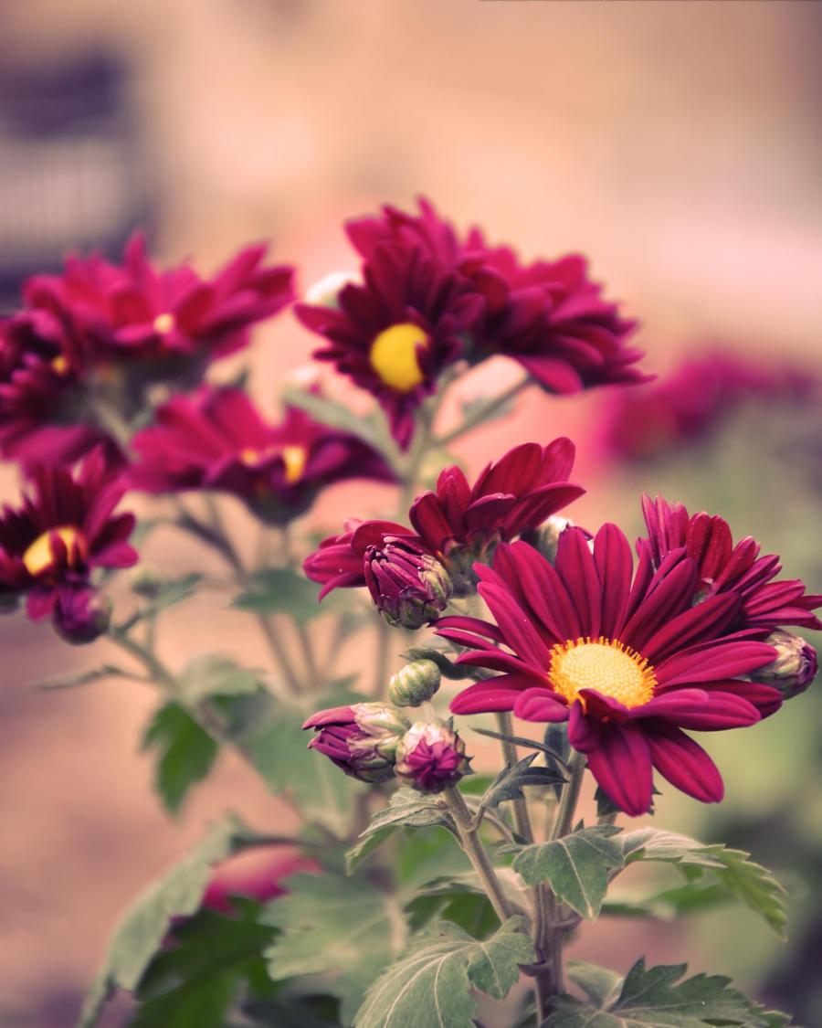 Bouquet by Mega-Shots