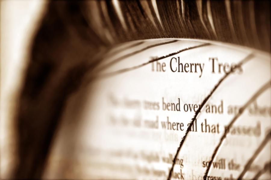 The Cherry Trees by Mega-Shots