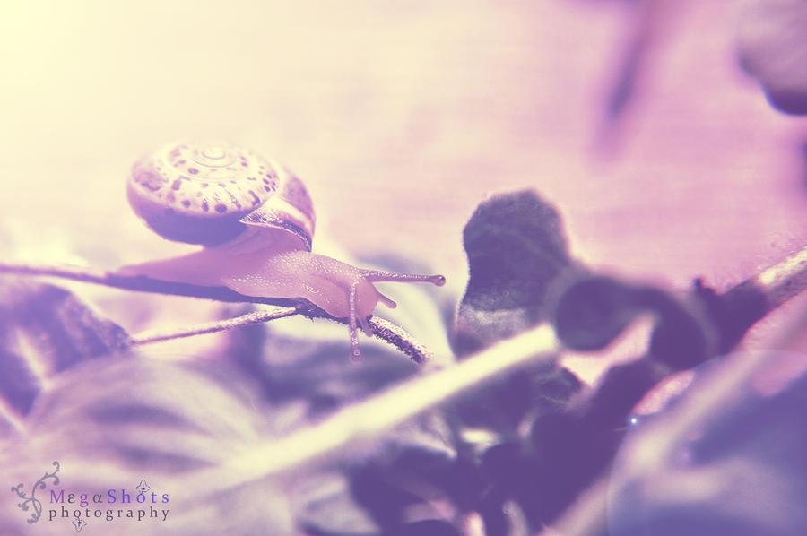 Meet Tobi: the snail by Mega-Shots