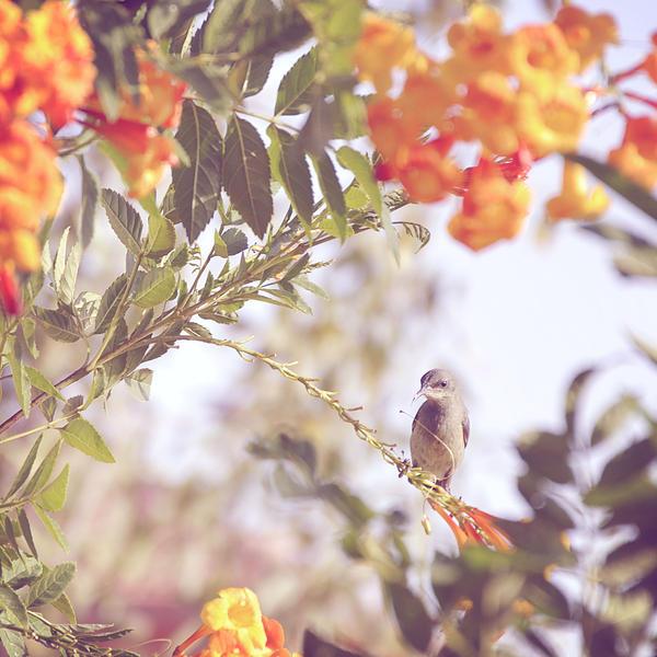 A Bird's Portrait by Mega-Shots