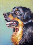 Oil pastel dog