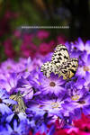 Paradise of Butterfly IV