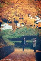 Lovers under Ginkgo Tree by WindyLife