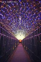 Walk under Lights Arcade by WindyLife