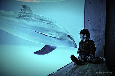 Nice to meet you Dolphin by WindyLife