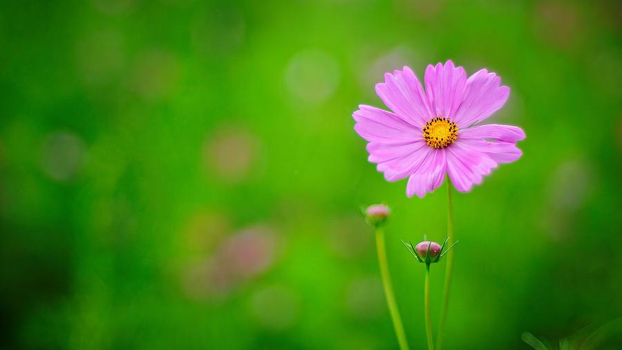 Цветы на зелёном фоне