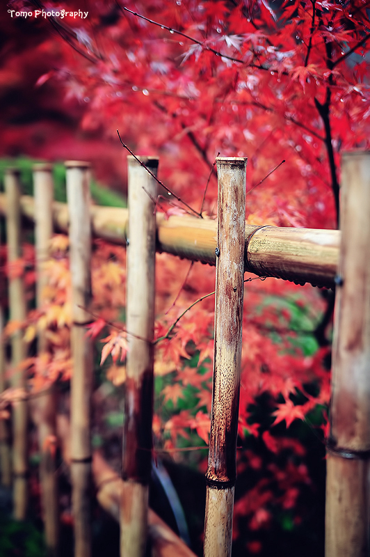 Japanese Garden by WindyLife