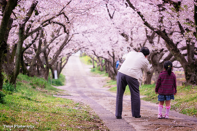 Sakura Arch II by WindyLife