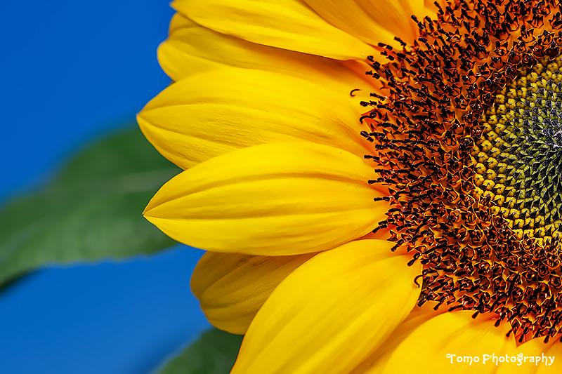 Sun by WindyLife