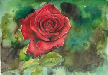 Rose watercolor green